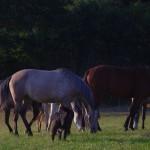 rando cheval villefranche de panat