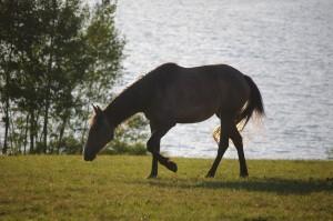 randonne cheval aveyron