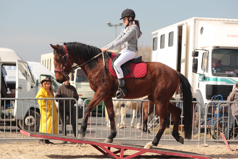 qualifié cheval loisir mention selection